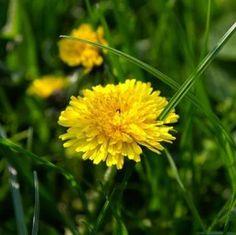 Get Rid of Weeds