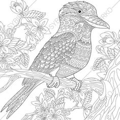 Kookaburra Adult Coloring Book Page. by ColoringPageExpress