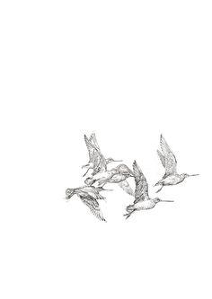 John Wolseley Godwits in flight, graphite on paper; Shorebirds, 2d Art, Environmental Art, Drawing Reference, Art Techniques, Sketchbooks, Art Inspo, Watercolour, Contemporary Art