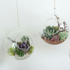 We are down to our last 2x lamp blown and hand crafted Hanging Glass Terrariums at For Keeps. Terrariums are perfect for herbs small hanging plants (such as air plants) and cute little succulents. Just $15 -- and we also include some instructions for planting and maintaining. http://ift.tt/28RVFsV #indoorplants