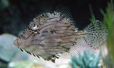 Sea Life | Flickr: partage de photos!