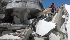 Muere Dayko el perro que salvó a siete personas en terremoto en Ecuador   Dayko un labrador de cuatro años murió la mañana de este viernes 22 de abril de 2016. Según Jorge Ortega su guía el animal fue víctima de un golpe de calor. Dayko había pasado cuatro días trabajando en Pedernales una de las zonas más afectadas por el terremoto de 7.8 grados que sacudió al país el sábado 16 de abril de 2016. Por qué murió?  Según Patricio Torres médico veterinario de la clínica Perros y Gatos el golpe…