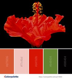 Color Palette Ideas from Flower Orange Flowering Plant Image