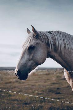 Funny Horses, Cute Horses, Horse Love, Cute Horse Pictures, Horse Photos, Horse Wallpaper, Animal Wallpaper, Most Beautiful Animals, Beautiful Horses