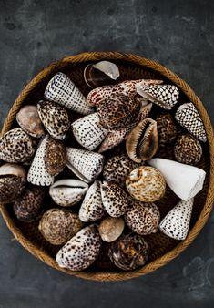 Paniers de coquillages