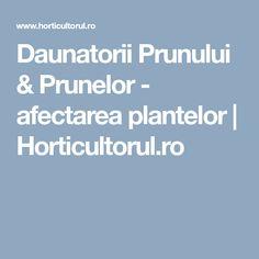 Daunatorii Prunului & Prunelor - afectarea plantelor   Horticultorul.ro