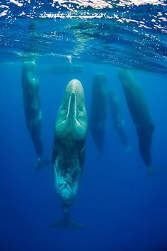 Whales hanging out