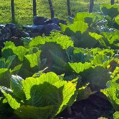 tips for edible landcape planting