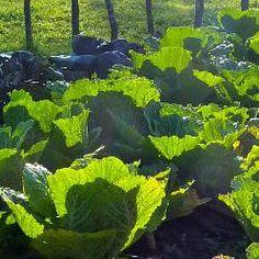 perennial  edible front yard