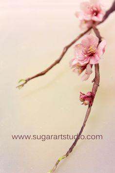 Gumpaste Cherry Blossom