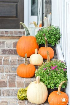 Fall front porch decor with pumpkins and purple mums. Fall Front Porch Inspiration and Ideas including a fall wreath, orange and white pumpkins, and planters. Halloween Porch, Halloween Home Decor, Fall Home Decor, Autumn Decorating, Pumpkin Decorating, Porch Decorating, Mums In Pumpkins, White Pumpkins, Purple Mums