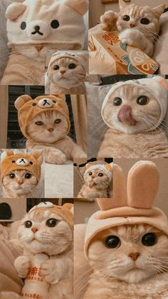 Funny Cat Wallpaper, Cute Panda Wallpaper, Bear Wallpaper, Cute Disney Wallpaper, Wallpaper Iphone Cute, Cute Kawaii Animals, Cute Little Animals, Cute Funny Animals, Cute Baby Cats