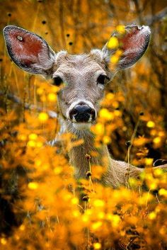 Wildlife at its Best! Enjoy! #WackyWildlife Deer in Fall