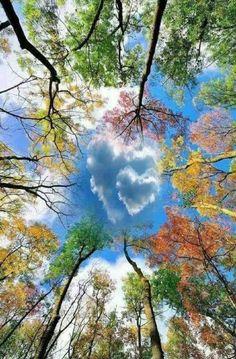 art fotografia 25 herausragende Fotos, die un - art Beautiful Nature Wallpaper, Beautiful Landscapes, Heart In Nature, Nature Tree, Art Nature, Image Nature, Colorful Trees, Green Trees, Nature Pictures