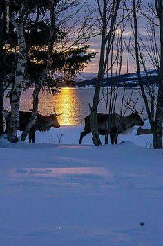Winter beautiful silhouette. Tromso, Norway