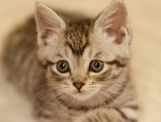 These 12 before and after cat photos prove that out fur babies are always kittens at heart! Check them out for a strong dose of cuteness! Baby Kittens, Cute Cats And Kittens, Kittens Cutest, Cute Cats Photos, Kitten Photos, Charles Darwin, Beautiful Kittens, National Animal, Kitten Gif