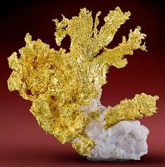 Crystalline Native Gold on white Quartz matrix