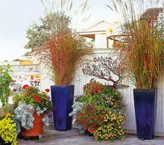 Bright, tall pots with dramatic ornamental grasses planted in them