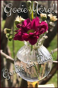 Lekker Dag, Goeie Nag, Goeie More, Afrikaans Quotes, Morning Greeting, Good Morning Quotes, Deep Thoughts, Advice, Flowers