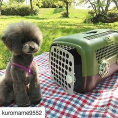 ・ 先日の新商品オートのプレゼント企画でカモフラージュ柄を当選された@kuromame9552 さん さっそくお出掛けの際にオート・プラスを使ってくださったそうです❗ ・ トイプードルの黒豆くんもみんなでお出掛けできて嬉しそう🎵 お利口さんにお座りしてて、何だかモデルさんみたいですね🐶✨ ・ 素敵なお写真ありがとうございました☺ ・ ・ #ユナイテッドペッツ #unitedpetsjapan #愛犬 #犬 #いぬ #わんこ #トイプードル #トイプー #愛猫 #猫 #ねこ #にゃんこ #いぬら部 #ねこら部 #ペットサロン #ドッグカフェ #ねこカフェ