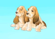 Raising Basset Hound Pups. Some of this is generic good sense when having a dog, but a chunk of this is about basset personalities.