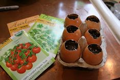 Here's an easy and inexpensive gift you can make with the kiddos to give to teachers and friends to celebrate all the wonder of spring. Egg Shell Planters, Decorative Planters, Broken Egg, Buy Seeds, Wild Strawberries, Herb Seeds, Bunny Crafts, Inexpensive Gift, Seed Starting