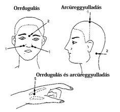 Anatomy, Artistic Anatomy