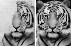 Chronic Ink Tattoo - Toronto Tattoo. Tiger drawing by guest artist Janice.
