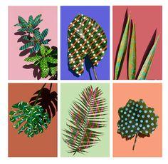 Sarah Illenberger: Wonderplants
