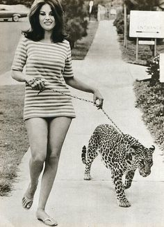1969 just walkin my cheetah in the 60's guys ! ... I missed out on so much being born in the 80's :(