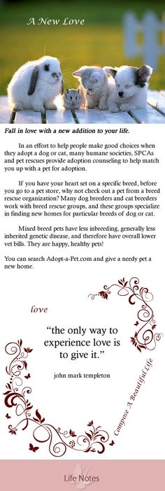 """""""the only way to experience love is to give it.""""    Fall in love with a new addition to your life.     In an effort to help people make good choices when they adopt a dog or cat, many humane societies, SPCAs and pet rescues provide adoption counseling to help match you up with a pet for adoption. #babyanimals baby animals, white"""