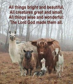 All things bright and beautiful, All creatures great and small, All things wise and wonderful; The Lord God made them all.