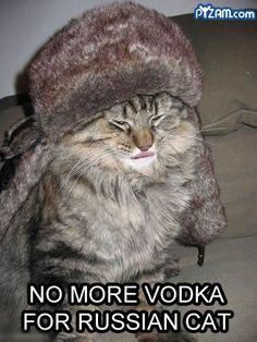 funny animals photo: Funny Animals russiancat.jpg