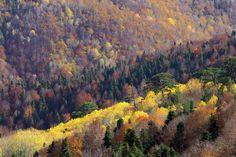 Yenice Ormanları-Karabük'te Gezilecek Yerler Listesi