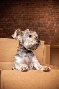 The Best Moving Tips For Dog Owners. It's ALWAYS rough, hopefully these tips help!