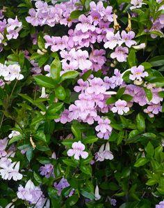 Violet Trumpets by blakcirclegirl.deviantart.com on @DeviantArt