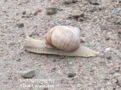 Snail is walking slowly and feel and see every moment of there journey <3 So please stop for awhile and see what lovely thing you have around you <3 Enjoy it <3
