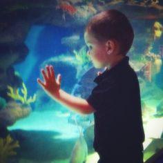 The Cleveland Aquarium and my grandson, Scotty