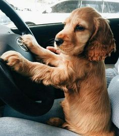 This little guy is probably a better driver than me