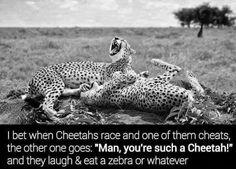 Cheatah