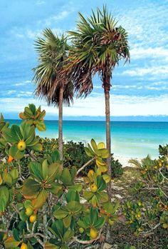 Pic of the Day…Greenery 🍀🌴 --------------- Cayo Santa Maria, Santa Maria Cuba, Varadero, Beautiful Islands, Beautiful Beaches, Cuba Pictures, Shell Island, Costa, Visit Cuba