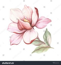 Flower Drawing Discover Image Blooming Magnolia Branch Watercolor Illustration Stock Illustration 769210465 Image of blooming magnolia branch. Art Floral, Magnolia Branch, Magnolia Flower, Botanical Drawings, Botanical Prints, Painting & Drawing, Watercolor Paintings, Watercolor Artists, Painting Lessons