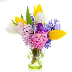Photo about Beautiful spring flowers isolated on white background(crocus, hyacinth, tulip). Image of fresh, bouquet, flower - 18213293 Spring Flower Bouquet, Tulip Bouquet, Spring Flowers, Images Of Colours, Background For Photography, Photography Backgrounds, Centerpieces, Table Decorations, Planting Flowers