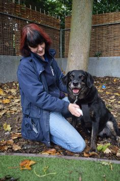 Can you offer affectionate Brody a loving home? #dogs