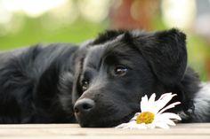 Betegségei a gyomor kutyában: leírás a fő patológiás