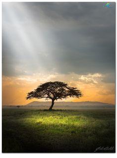 - Serengeti Landscapes -  by Jordan  Cantelo on 500px