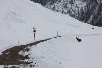 Die Jagd in der Schweiz wird kantonal und eidgenössisch geregelt.