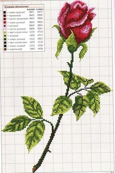 http://media0.webgarden.cz/images/media0:510b26eba62cd.jpg/r%C5%AF%C5%BEe.jpg: