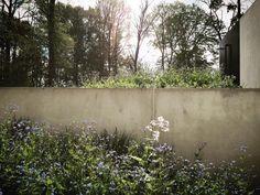 BURO BUITEN | Privétuin Edingen | Vanhaelen Architecten | Pieter Van Hauwermeiren | tuinarchitect | tuinarchitectuur | Landschapsarchitectuur Balcony Garden, Fences, Planting, Garden Design, Landscapes, Walls, Exterior, Flowers, Projects
