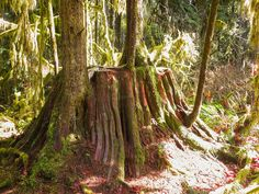 Large Stump near start of trail Hiking Routes, Tree Stump, Great Photos, Trail, Plants, Planters, Plant, Planting